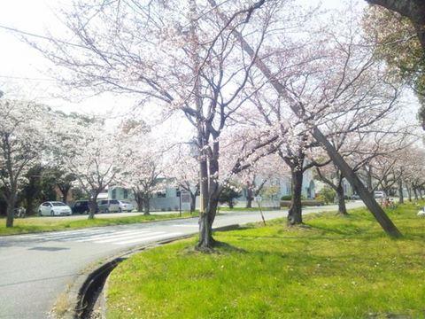 2012-桜- - 2