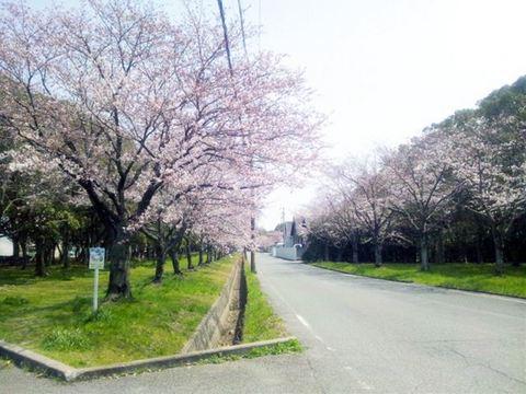 2012-桜- - 1