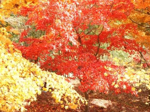 もみじ山の紅葉①