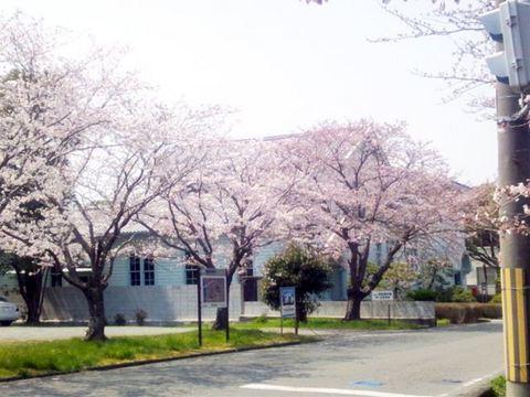 2012-桜- - 3