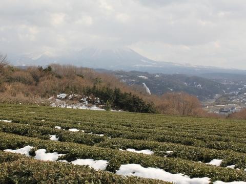 壷瓶山からの大山
