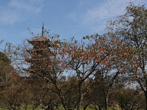 柿の木越しの五重塔