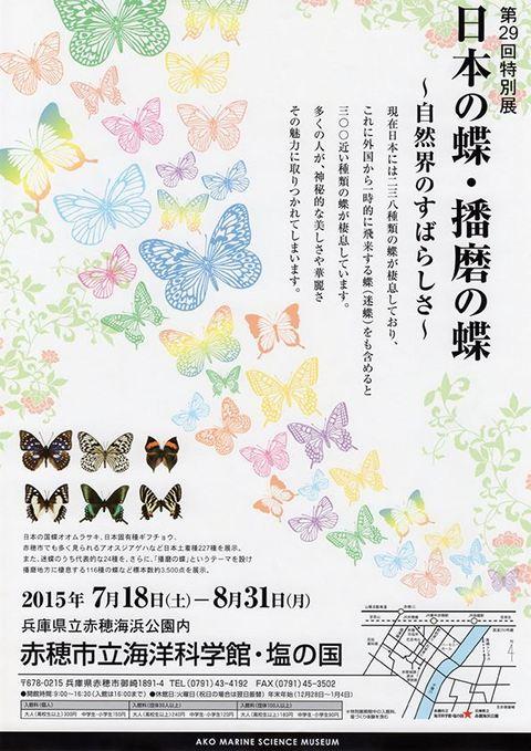 第29回特別展 日本の蝶・播磨の蝶