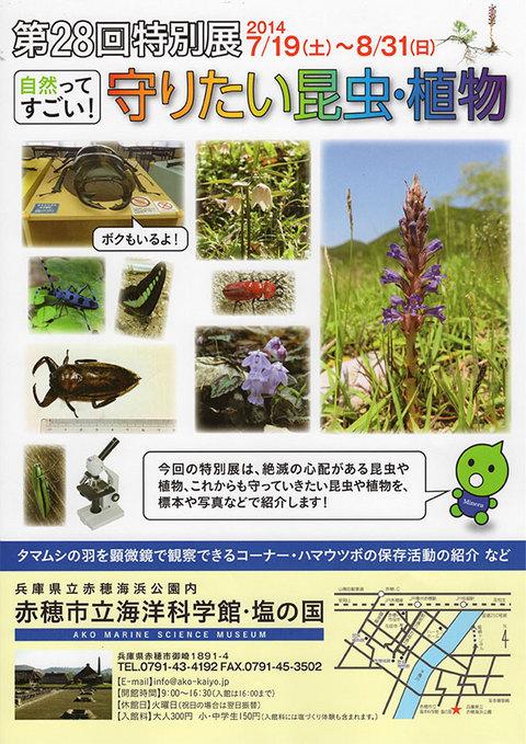 第28回特別展『自然ってすごい! 守りたい昆虫・植物』