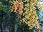 もみじ山の紅葉④