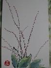 水引草 (450x600)