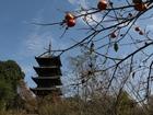 五重塔と柿の実