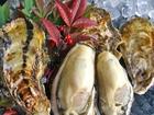 かましま水産牡蠣