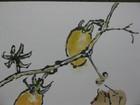 黄ミニトマト (600x450)
